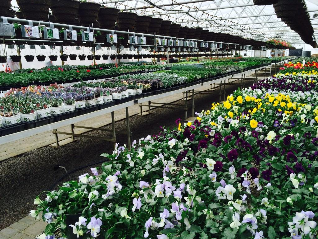 Greenhouse Alexandria MN
